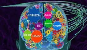 cerebro3